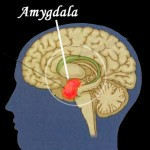 The amygdala can hijack your brain.